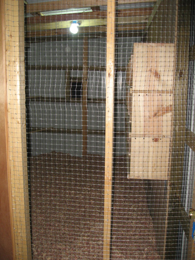 When you step up in from the front door you can see directly into the breeder area. The loft entrance faces west and with the glass in the door should get ... & New Pigeon Loft \u2022 General Chat : Gun Dog Forum 2013 Pezcame.Com